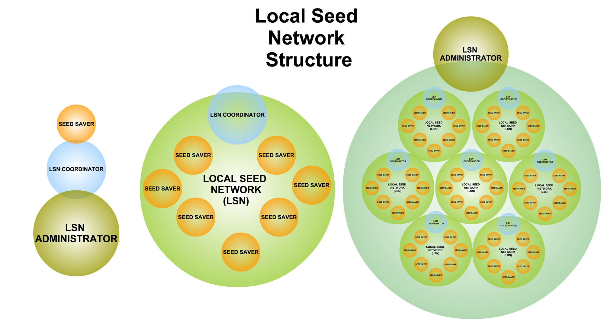 Local Seed Network Structure Diagram