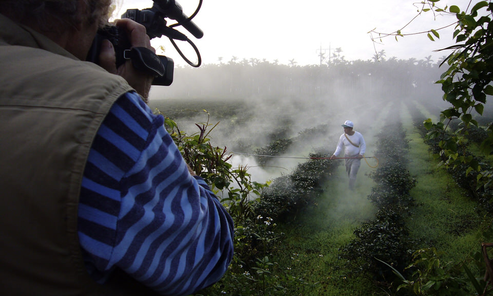 Spraying tea in Taiwan early morning for fungicides.