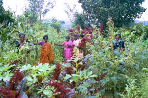Tribal women in Karnataka are the guardians of seeds like these amaranth and okra.