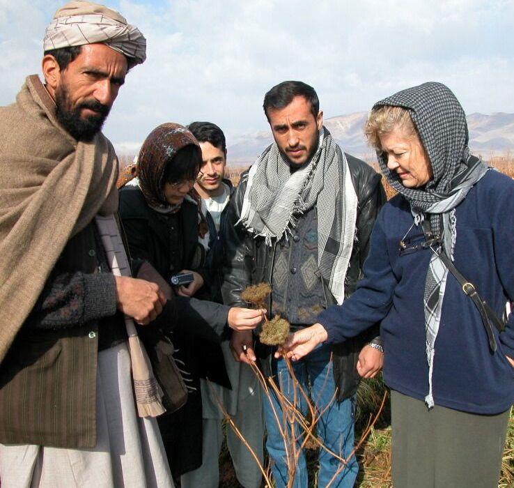 Afghanistan Dec 2002: Jude in the carrot fields near Herat.